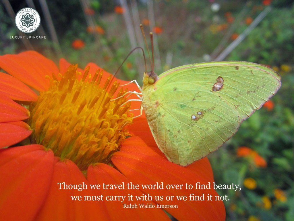 travel quote, butterfly