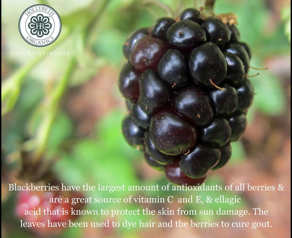 blackberries-002