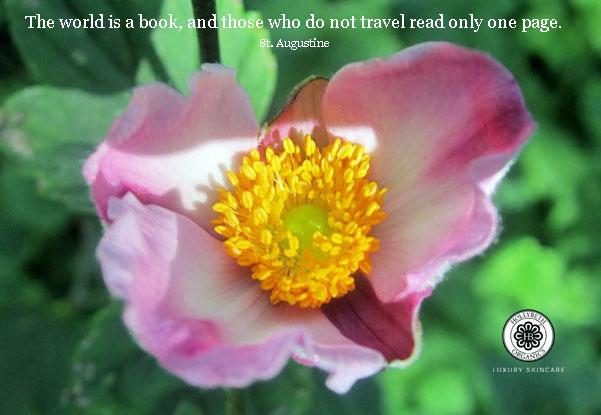 anemone,