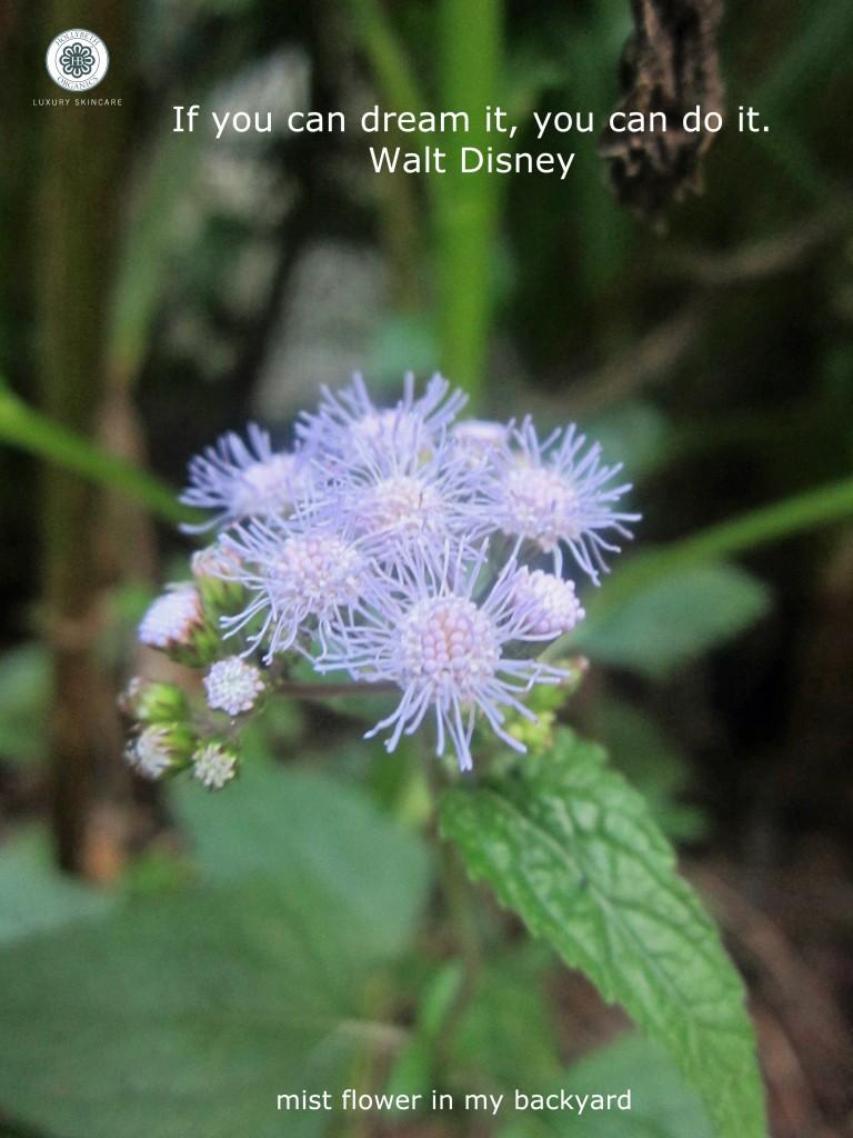 mistflower