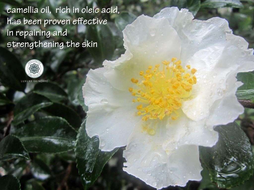 camellia post